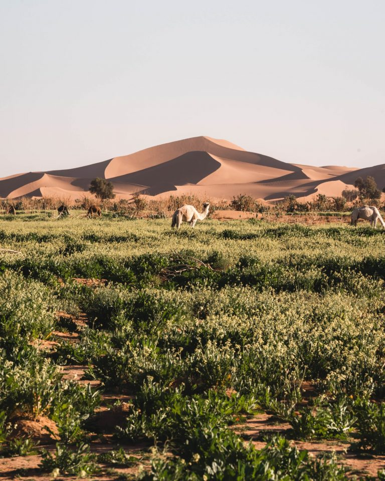 Erg Chegaga - Best Ten Places in M'Hamid Desert