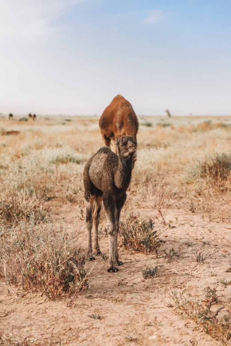 Lbour - Best Ten Places in M'Hamid Desert