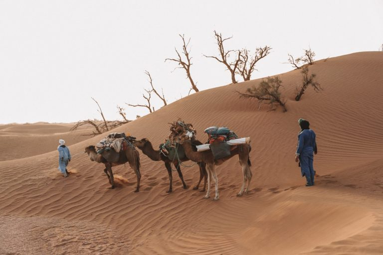 Desert Trekking with Walking with Nomads