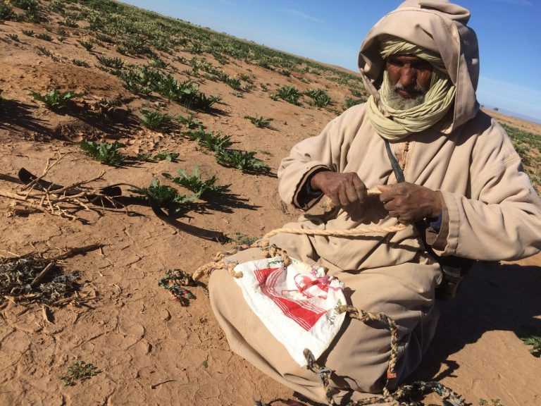 Nomad crafts Walking with Nomads