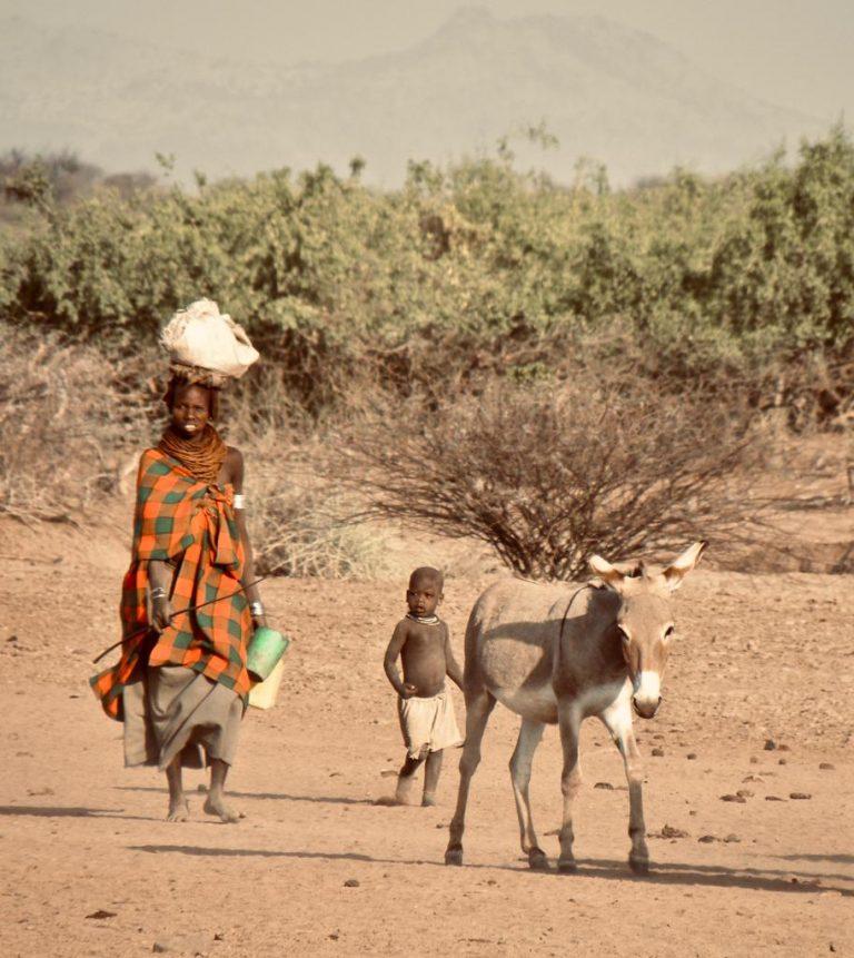 nomad image 2