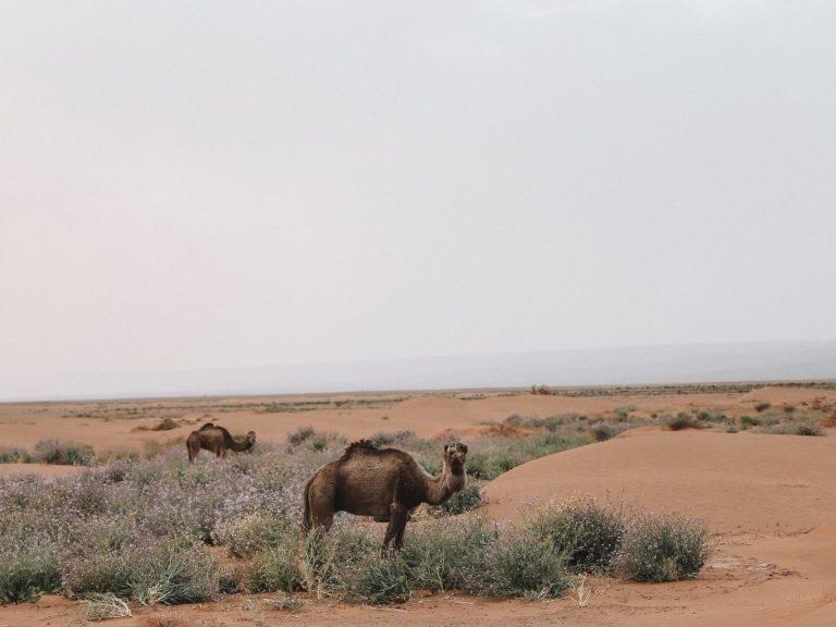 4x4 safari 1 Day walking with nomads