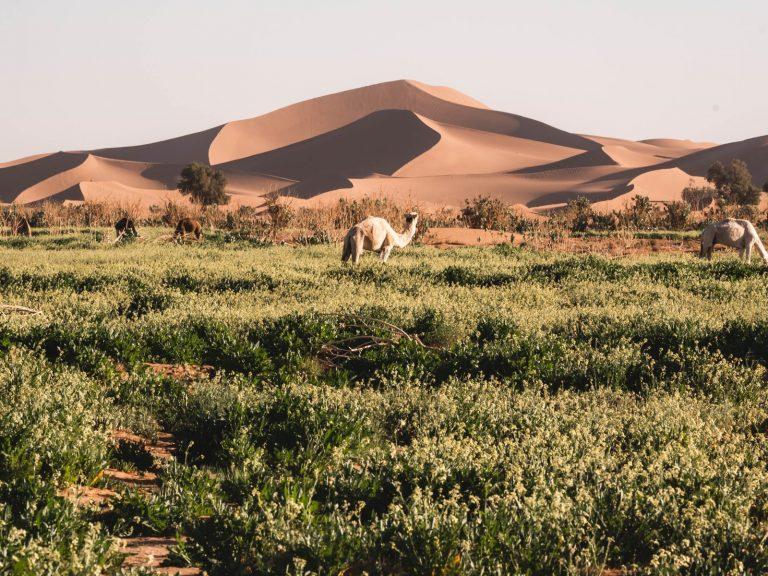 4x4 safari walking with nomads erg chegaga