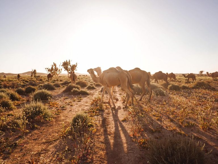 One day desert safari to chegaga walking with nomads