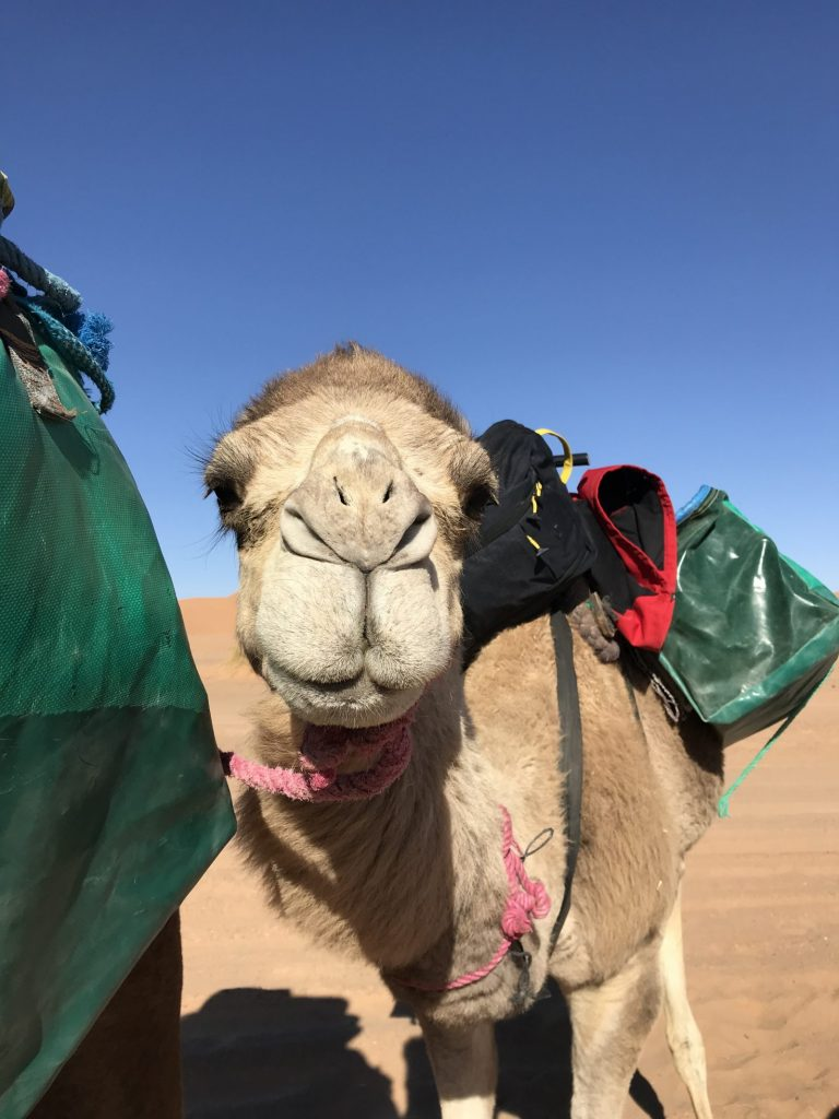 2 Day Desert Trek with Walking with Nomads Camel Face