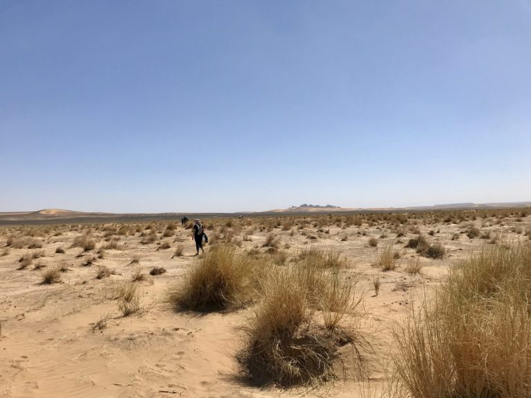 2 Day Desert Trek with Walking with Nomads Terrains