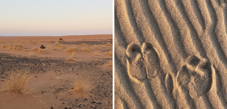 Sunrise Scene & Camel Prints