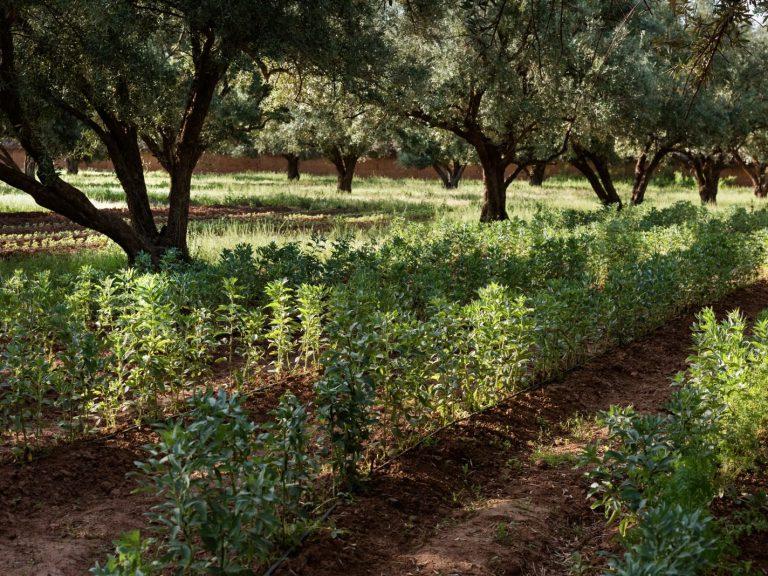 Gardens 11