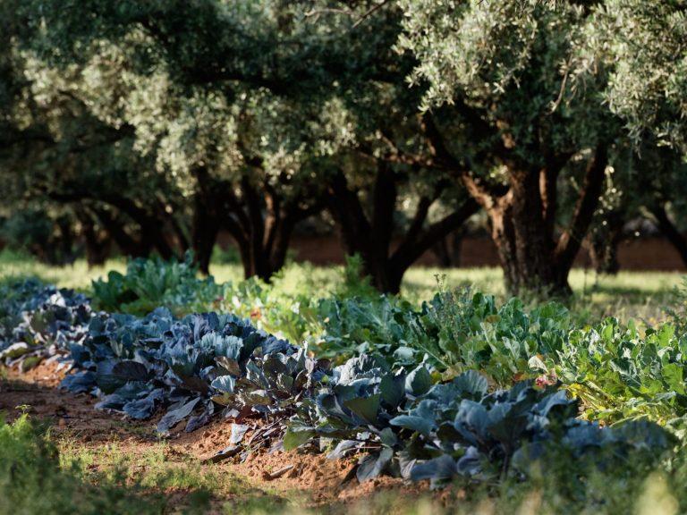 Organic Gardens Walking with Nomads