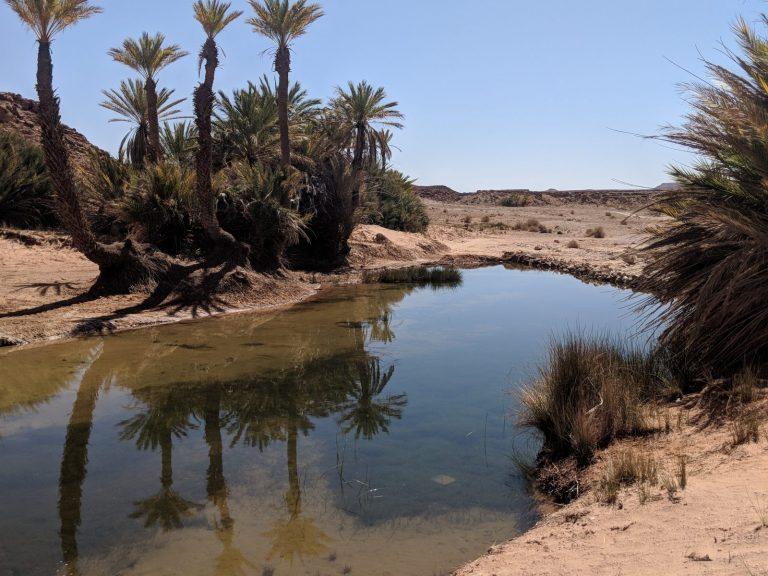 safsaf oasis
