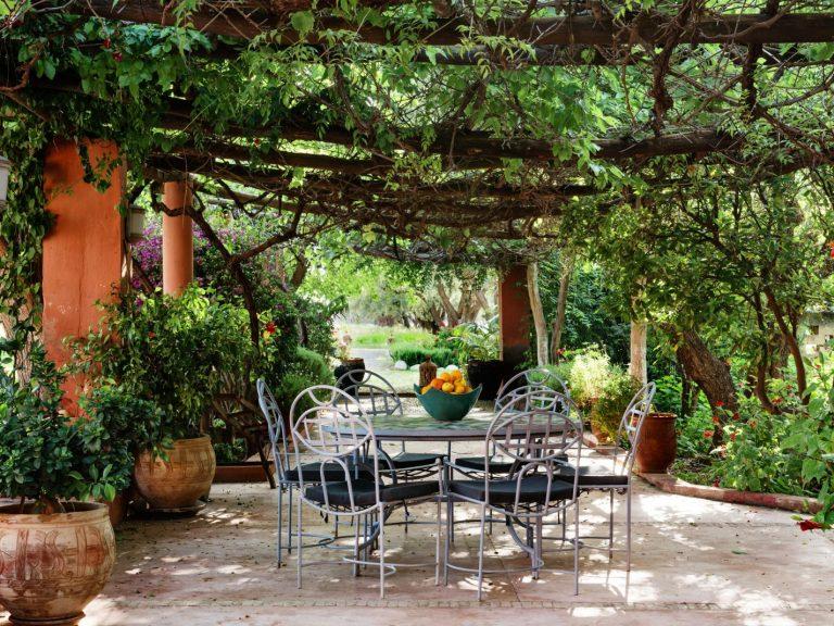 dinning under vines